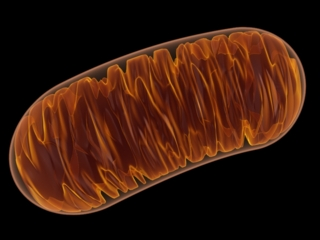mitochondrie, DNA world